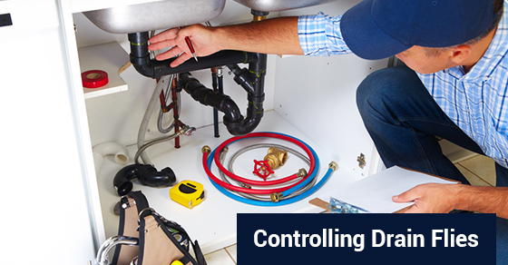 Controlling Drain Flies