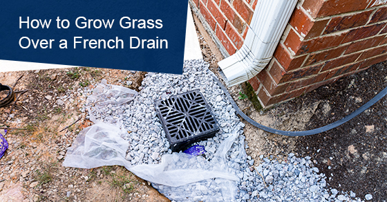 How to Grow Grass Over a French Drain